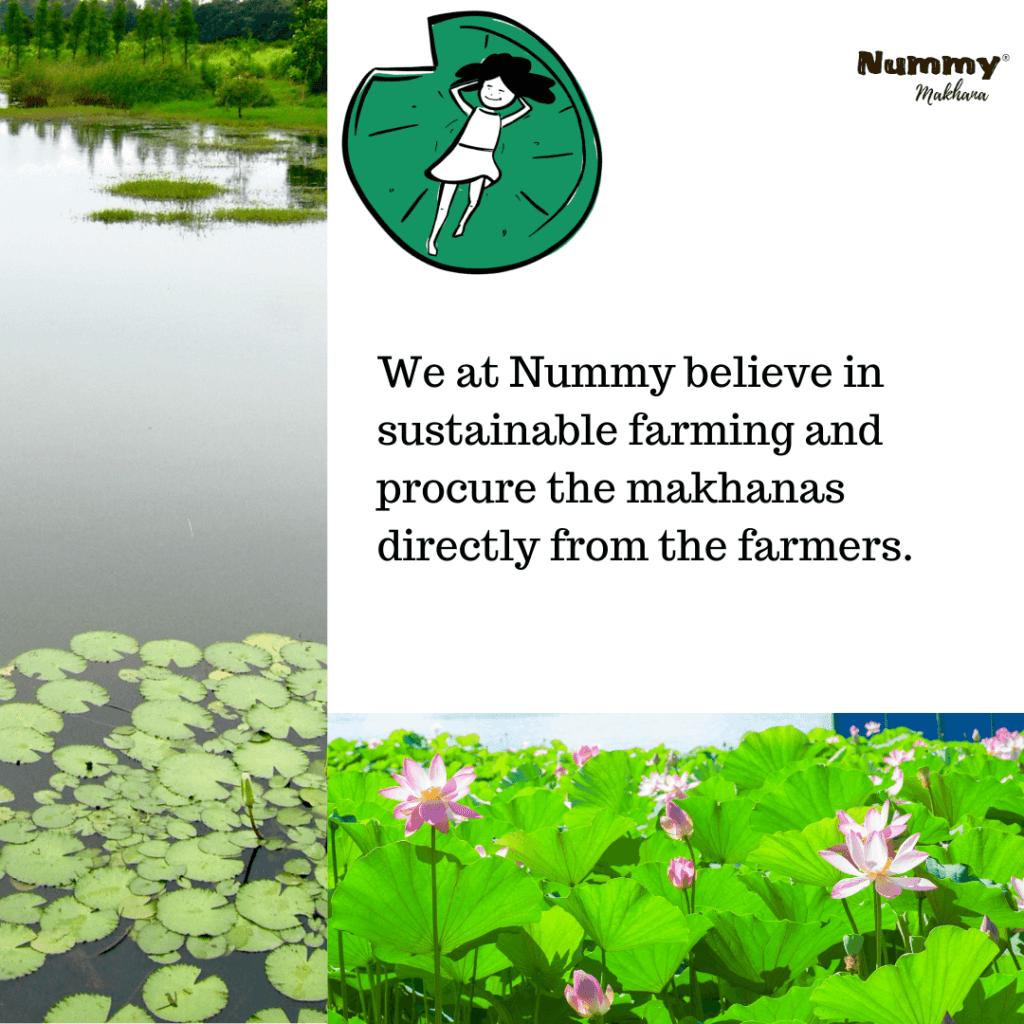 Nummy - Sustainable makhana farming