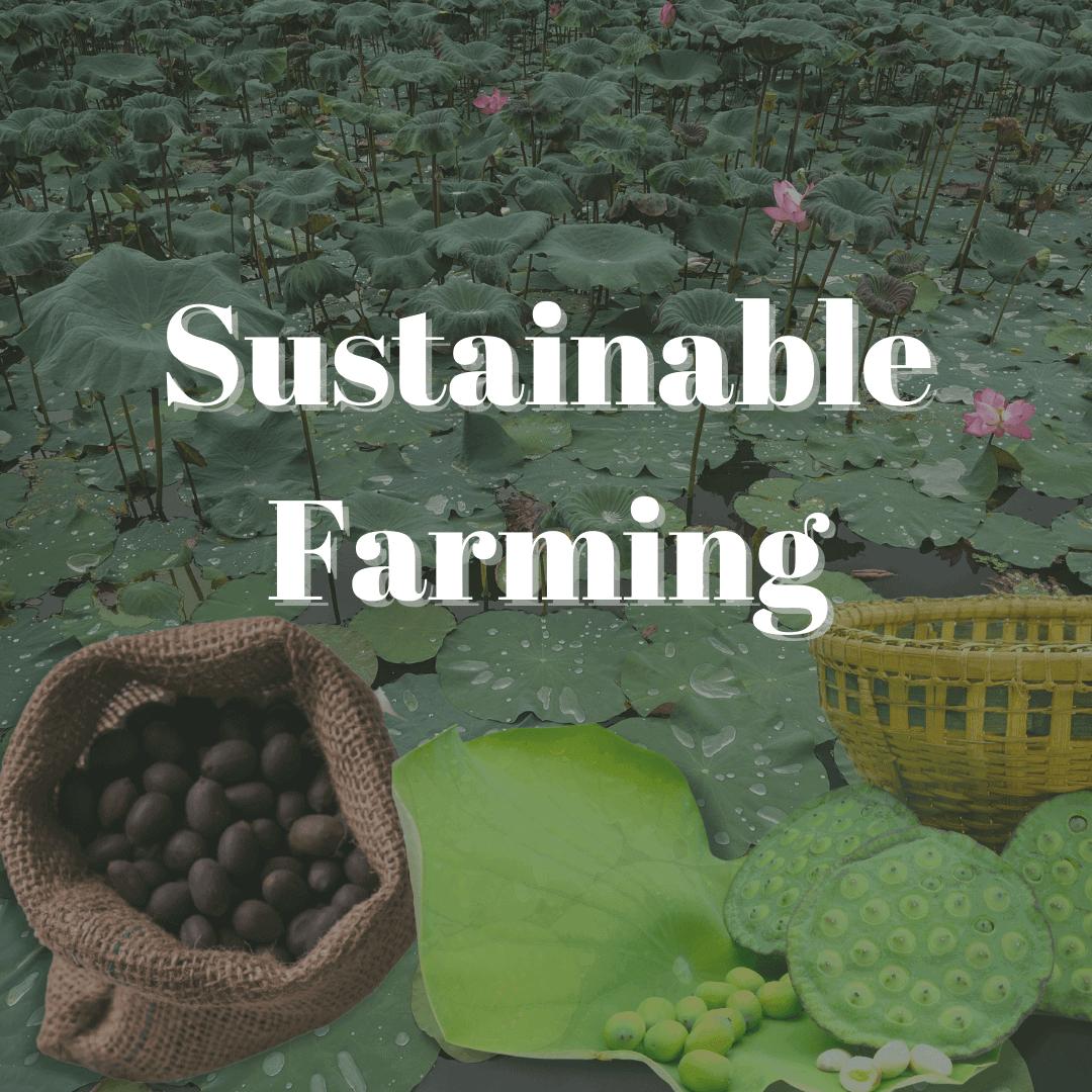 Sustainable Farming - Nummy Makhana Blog
